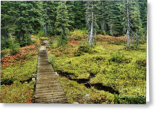Mazama Greeting Cards - Wooden Foot Bridge Over Stream Greeting Card by Ned Frisk