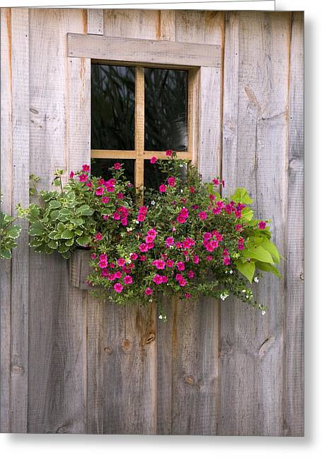 Wooden Shed Greeting Cards - Wooden Shed With A Flower Box Under The Greeting Card by Michael Interisano