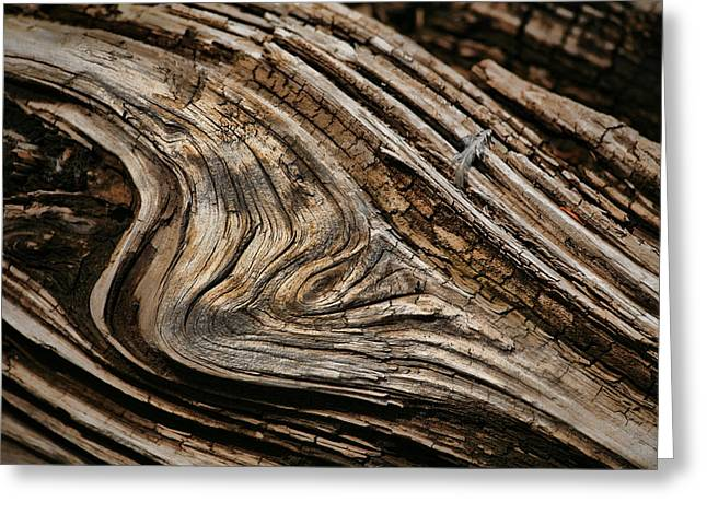 Wood Grain Greeting Cards - Woodgrain Greeting Card by Bonnie Bruno
