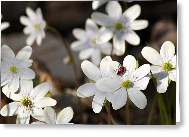 Wisconsin Wildflowers Greeting Cards - Woodland Flora and Friend Greeting Card by Bill Pevlor