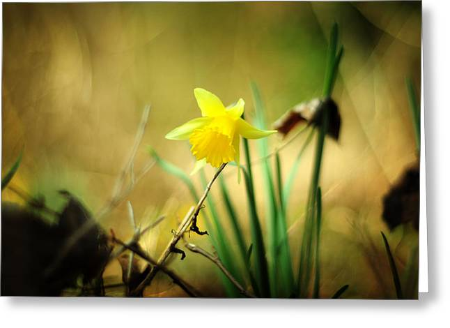 Lent Greeting Cards - Woodland Narcissus Greeting Card by Rebecca Sherman