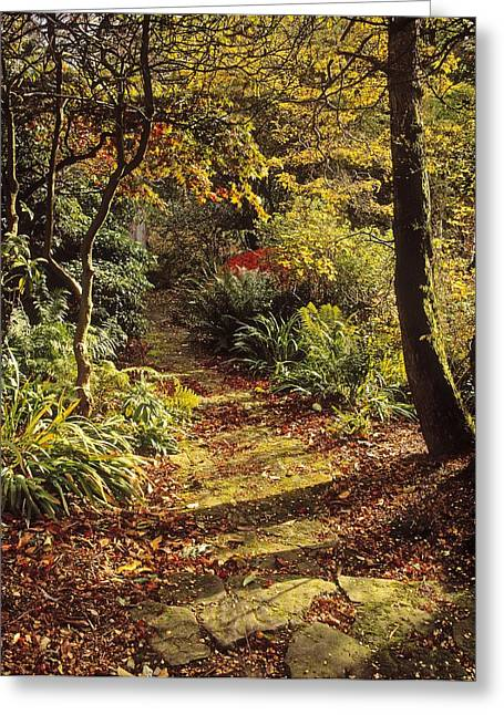 Garden Statuary Greeting Cards - Woodland Path, Mount Stewart, Ards Greeting Card by The Irish Image Collection
