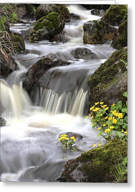 Moist Greeting Cards - Woodland Stream Rapids Greeting Card by Bjorn Svensson