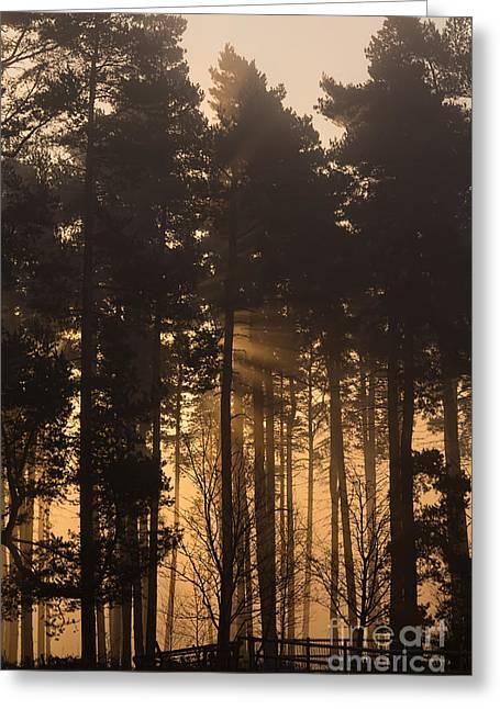 Cannock Chase Greeting Cards - Woodland Sunrise Greeting Card by Ann Garrett