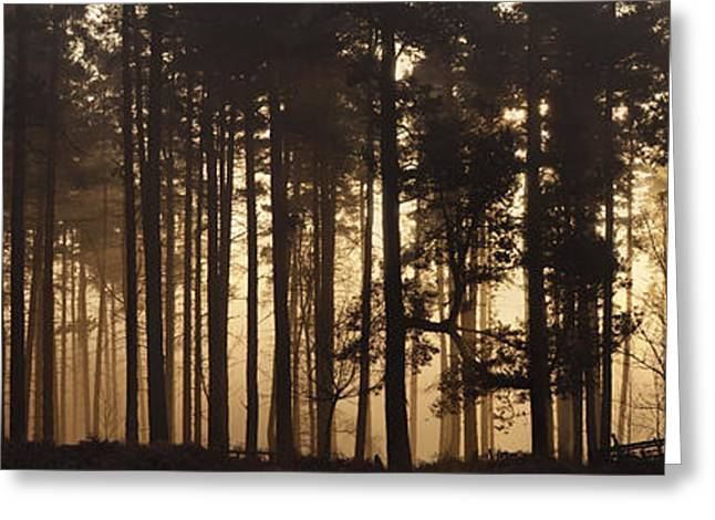 Cannock Chase Greeting Cards - Woodland Sunrise Panorama Greeting Card by Ann Garrett