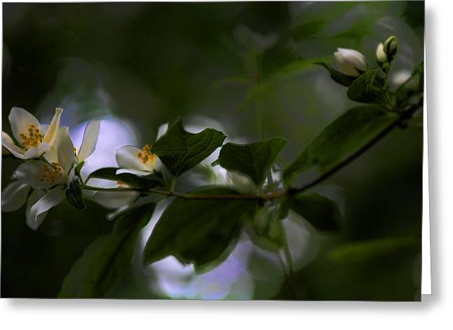 Flowering Vines Greeting Cards - Woodland Surprise Greeting Card by Bonnie Bruno