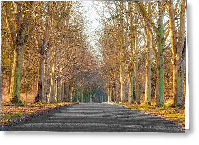 Asphalt Greeting Cards - Woodland Greeting Card by Tom Gowanlock