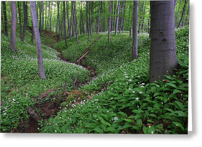 Pecs Greeting Cards - Woodland View With Blooming Bears Greeting Card by Joe Petersburger