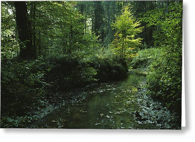 Woodland Scenes Greeting Cards - Woodland View With Stream Greeting Card by Klaus Nigge