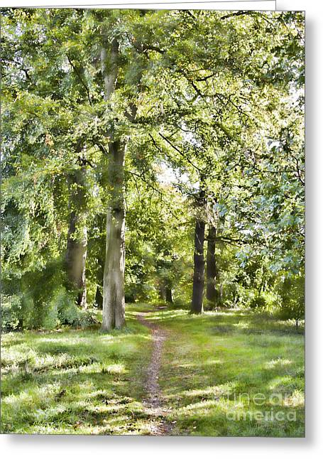 Www.picsl8.co.uk Greeting Cards - Woodland walk Greeting Card by Steev Stamford