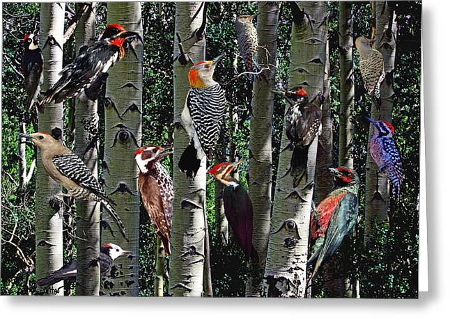 Hairy Woodpecker Greeting Cards - Woodpecker Collage Greeting Card by David Salter