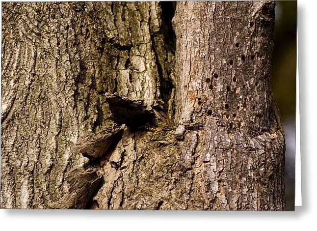 Woodpecker Greeting Cards - Woodpecker Damage in the bark Greeting Card by LeeAnn McLaneGoetz McLaneGoetzStudioLLCcom