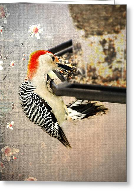 Bird-feeder Greeting Cards - Woodpecker Greeting Card by Kathy Jennings