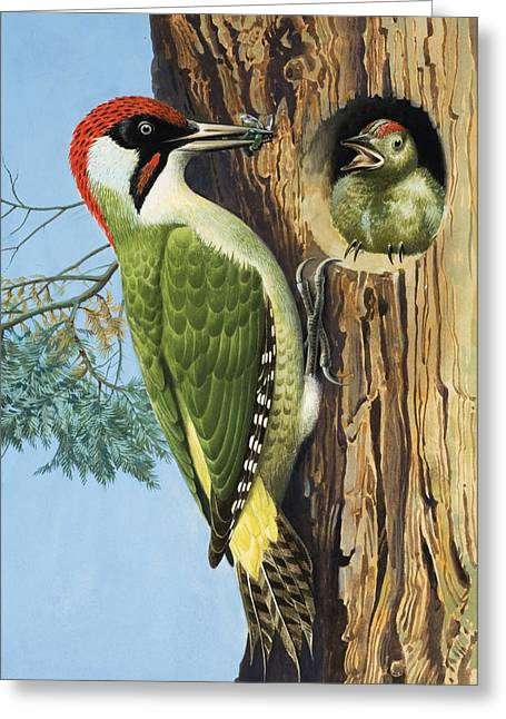 Baby Bird Paintings Greeting Cards - Woodpecker Greeting Card by RB Davis