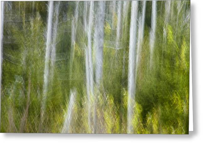 Nature Abstracts Greeting Cards - Woods Abstact Greeting Card by Andrew Soundarajan