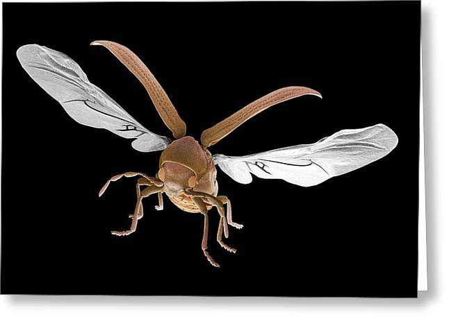 False-colour Greeting Cards - Woodworm Beetle In Flight Greeting Card by Power And Syred