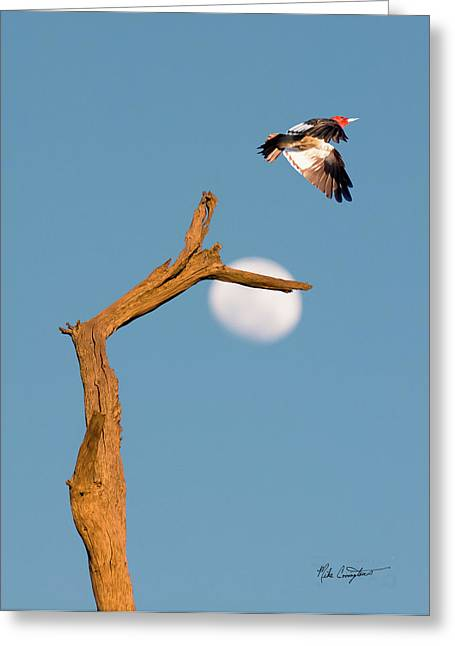 Mike Covington Greeting Cards - Woody flying by the Moon Greeting Card by Mike Covington