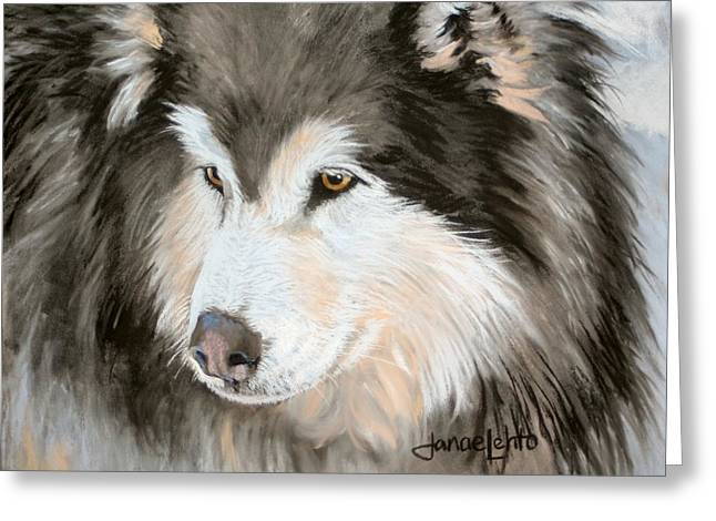 Sled Dogs Greeting Cards - Woolly Malamute Greeting Card by Janae Lehto