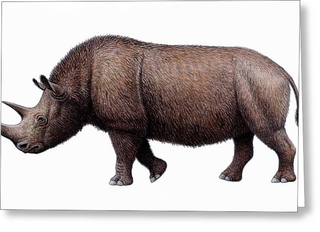 One Horned Rhino Greeting Cards - Woolly Rhinoceros, Artwork Greeting Card by Mauricio Anton