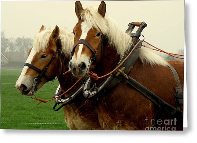 Lainie Wrightson Greeting Cards - Work Horses Greeting Card by Lainie Wrightson