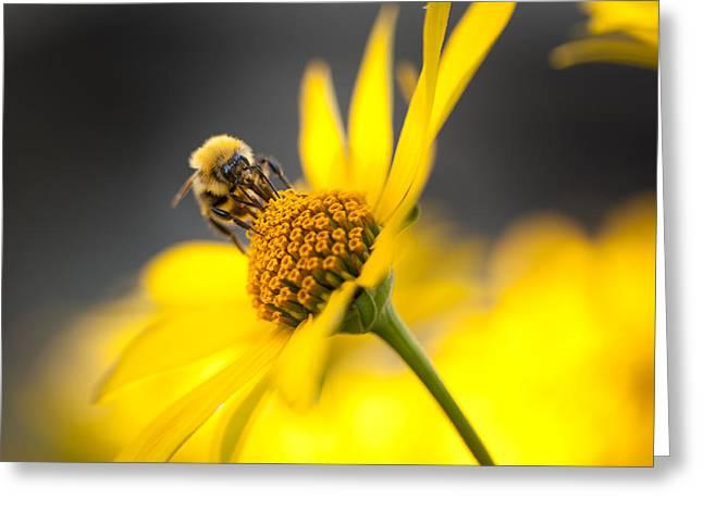 Working bee Greeting Card by Pavlo Kolotenko