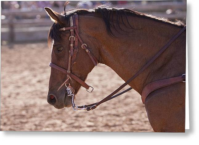 Bay Horse Greeting Card Greeting Cards - Working Cow Pony Greeting Card by Michelle Wrighton