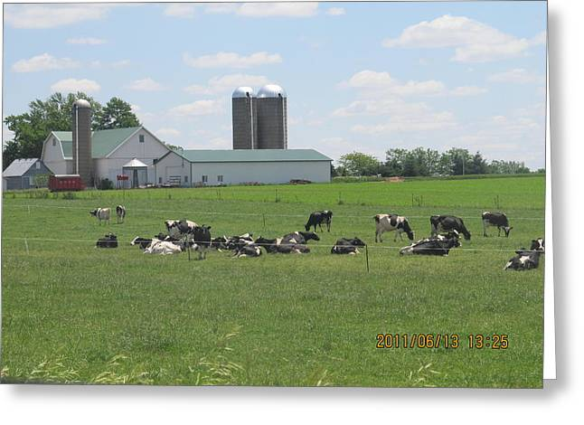 Working Milk Farm Greeting Card by Tina M Wenger
