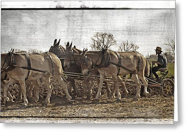 Amish Country Greeting Cards - Working The Fields Greeting Card by Kathy Jennings