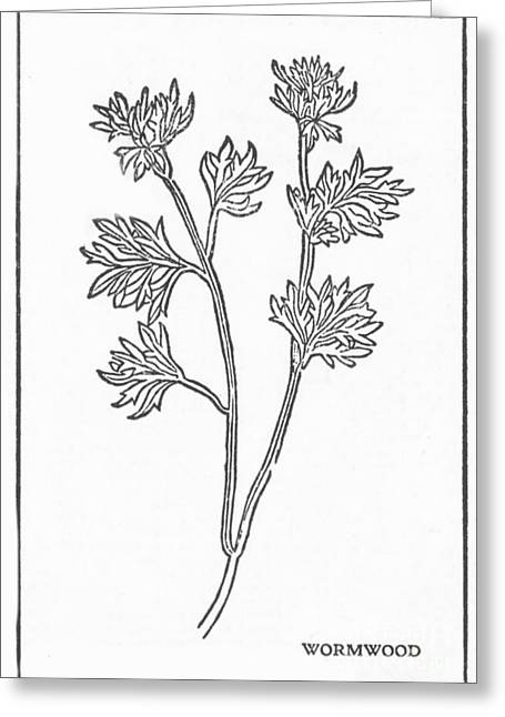 Hallucination Greeting Cards - Wormwood, Alchemy Plant Greeting Card by Science Source