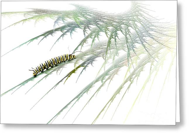 Insect Mixed Media Greeting Cards - Wormwood Greeting Card by Jan Piller