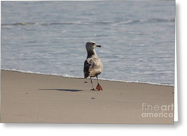 Oceanview Greeting Cards - Wounded Bird 6 Hurt Tired Calm Ocean Beach Photos Pictures Bird Seagulls Oceanview Beaches Water Sea Greeting Card by Pictures HDR