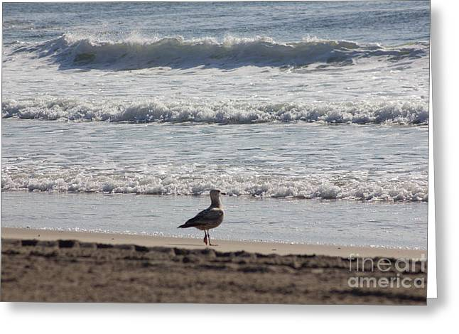 Oceanview Greeting Cards - Wounded Seagull 4 Seagulls Birds Photos Beach Beaches Sea Ocean Oceanview Scenic Seaview Art Pics Greeting Card by Pictures HDR