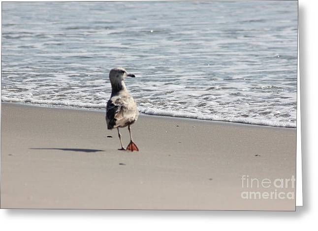 Beach Photographs Greeting Cards - Wounded Seagull 5 Seagulls Bird Beach Beaches Ocean Photos Pictures Art Photography Photograph Image Greeting Card by Pictures HDR