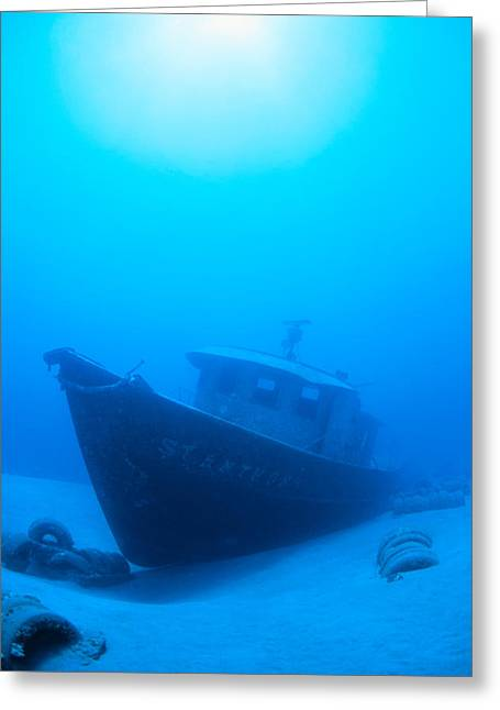 Snorkeling Photos Greeting Cards - Wreck Of The St. Anthony Greeting Card by Dave Fleetham - Printscapes