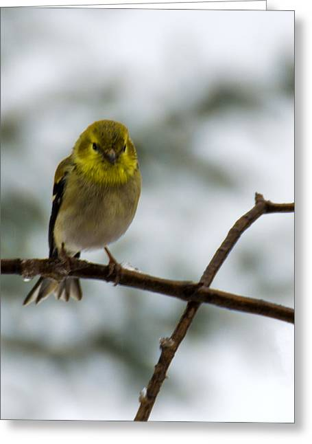 Wild Orchards Greeting Cards - X Bird Greeting Card by LeeAnn McLaneGoetz McLaneGoetzStudioLLCcom