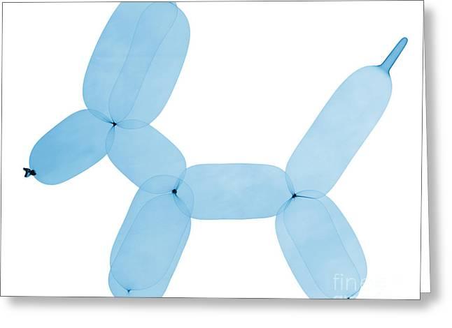 Radiograph Greeting Cards - X-ray Of Balloon Dog Greeting Card by Ted Kinsman
