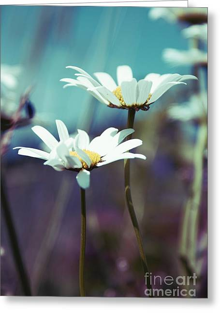 Marguerite Flowers Greeting Cards - Xposed - s02 Greeting Card by Variance Collections