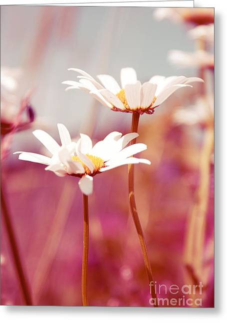 Daisy Greeting Cards - Xposed - s03 Greeting Card by Variance Collections