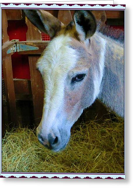 Yahoo The Mule Greeting Card by Mindy Newman
