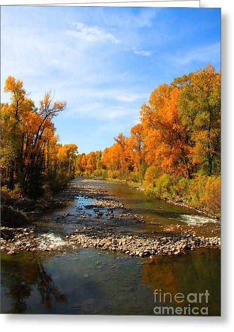 Yampa River Greeting Card by Dana Kern