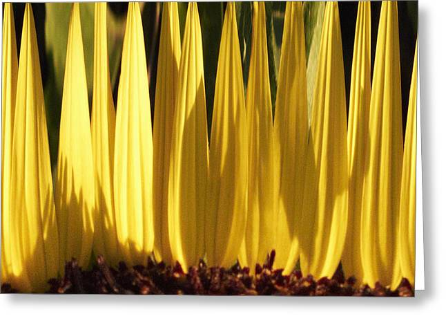 Tickseed Greeting Cards - Yellow 5 Greeting Card by Skip Nall