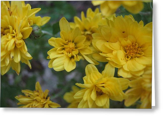 Flowers Sculptures Greeting Cards - Yellow As The Sun  Greeting Card by Brandy Westpheling
