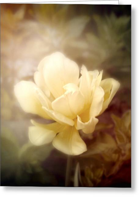 Cindy Grundsten Greeting Cards - Yellow Beauty Greeting Card by Cindy Grundsten