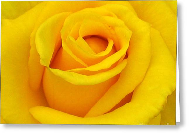 Yellow Beauty Greeting Card by Mg Rhoades