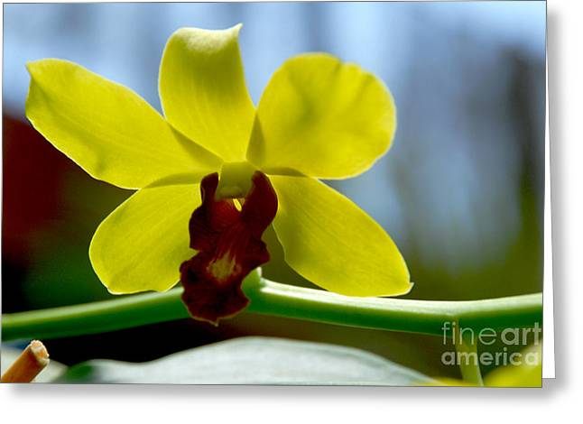Yellow Beauty Greeting Card by Pravine Chester