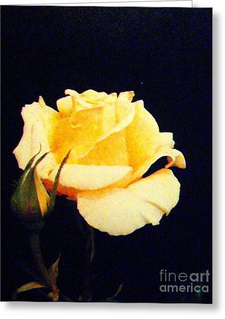 Shasta Eone Greeting Cards - Yellow Beauty Greeting Card by Shasta Eone
