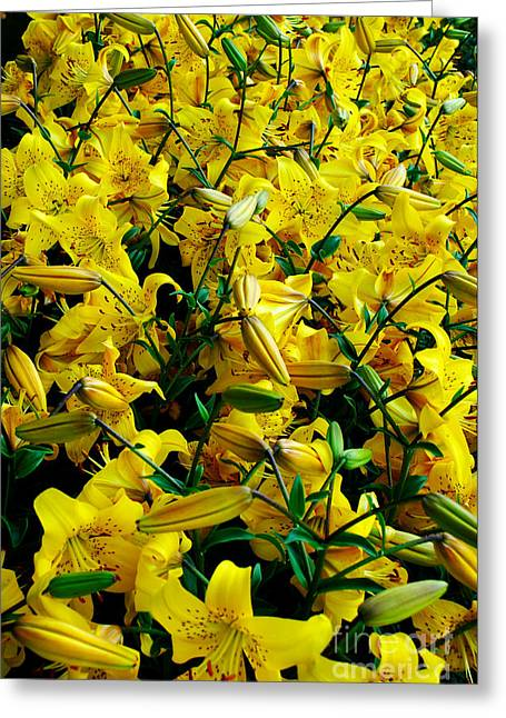 Yellow Bed Of Flowers Greeting Card by Pravine Chester