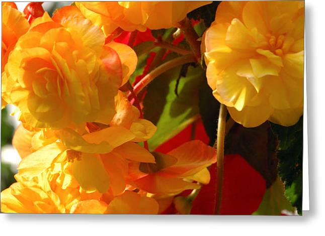 Yellow Begonia Flowers.  Victoria Greeting Card by Darlyne A. Murawski