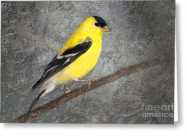 Goldfinch Digital Art Greeting Cards - Yellow Greeting Card by Betty LaRue