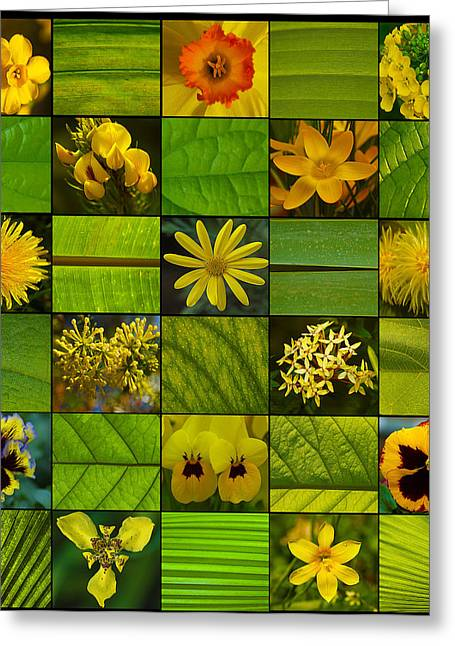 Most Favorite Greeting Cards - Yellow Blossoms Greeting Card by Fine Art  Photography
